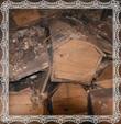 Zlý stav dreva rakiev, fotografia 11.5.2009